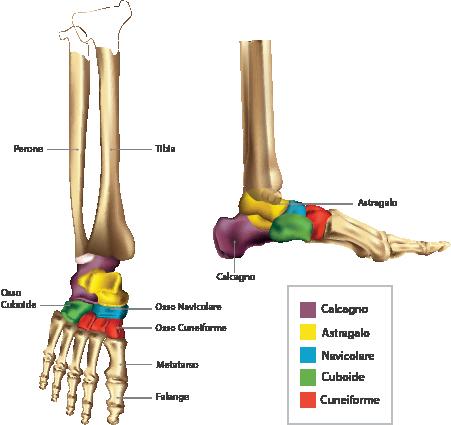 Fisio Point - Fisioterapia a Roma, Riabilitazione, Poliambulatorio, Medical Fitness, Piede, Riabilitazione del piede