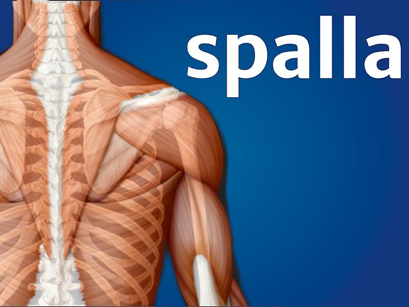 Fisio Point - Fisioterapia a Roma, Riabilitazione, Poliambulatorio, Medical Fitness, Spalla, Riabilitazione della Spalla