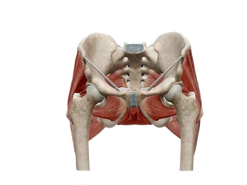 Fisio Point - Fisioterapia a Roma, Riabilitazione, Poliambulatorio, Medical Fitness, Propriocezione, recupero funzionale, post operatorio, anca, protesi anca, coxartrosi